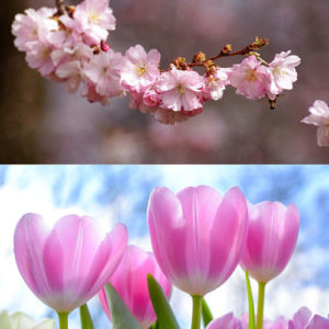 Frühlings / Sommerdüfte